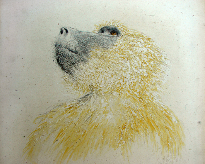 portrait of a baboon anubi (2006, combinated technique, 70 x 50 cm)