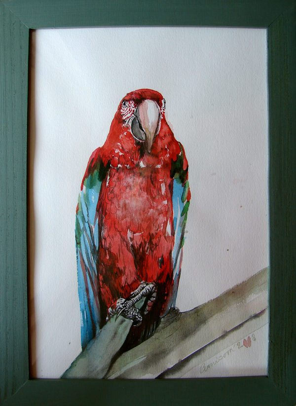 macaw (2008, aquarelle on paper, 29 x 21 cm)