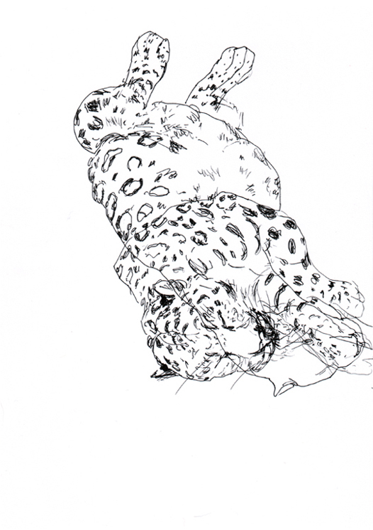 panther (2006, pen on paper, 29 x 21 cm)