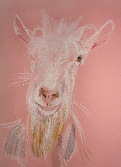 goat (2008, aquarelle and crayons, 29 x 21 cm)
