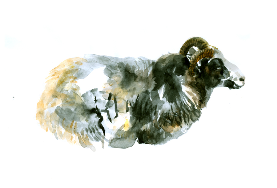 sheep (2008, aquarelle, 29 x 21 cm)