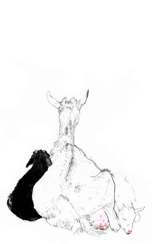goats (2008, pencil and aquarelle, 29 x 19 cm)